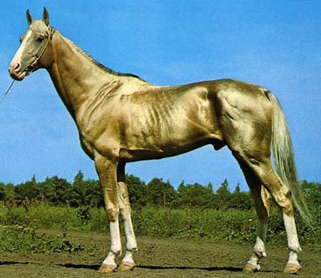 WHAT_architecture akhal-teke-horse-1